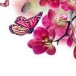 maria-florencia-risso