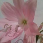 rosanafurlan